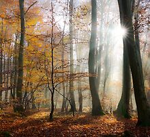 Sun rays in a mystic misty forest by Katho Menden