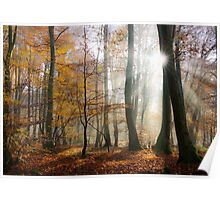 Sun rays in a mystic misty forest Poster