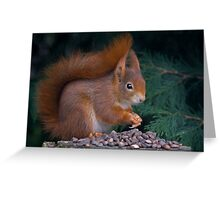 Nut Brunch Greeting Card