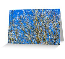 Willow buds - Easter Time Greeting Card