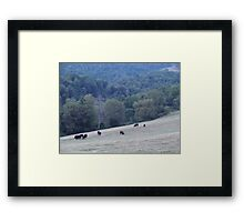 Cows in the field Framed Print