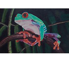 Red-eyed Australian Tree Frog  Photographic Print