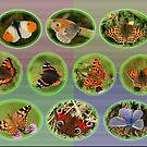Common Butterflies by Robert Abraham