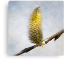 Willow Catkins - Silver World - Square Canvas Print