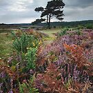 Autumn heath by outwest photography.co.uk