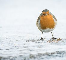 Cheeky Chappie by kt-photography
