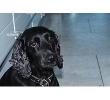 roxy the dog Photographic Print