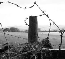 barb wire by paula cattermole