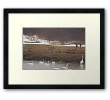 Natures family Framed Print
