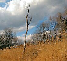 Barren Tree by Charlotte Hertler
