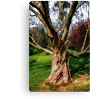 Twisting To Nature's Tune Canvas Print