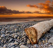 Driftwood by Robert Kendall