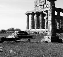 Paestum: column and temple by Giuseppe Cocco