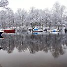 Winter on the Riverbank by Susan Dailey