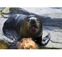 Sea Lion at Gweek Seal Sanctuary, Cornwall UK Photographic Print