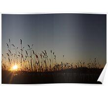 Squibnocket Reeds Poster