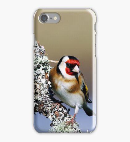 European Goldfinch - Carduelis carduelis iPhone Case/Skin