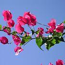 Pink Branch by MichelleR