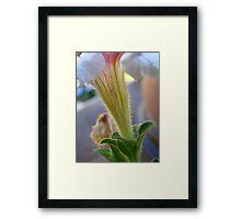 stem sell  Framed Print