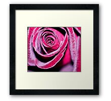 Frosted. Framed Print
