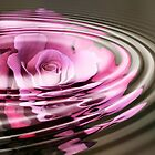 Rose Water by Donna Adamski
