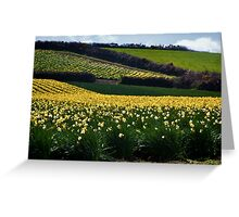 A Host of Golden Daffodils.... Greeting Card