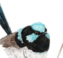 Superb Blue Wren Sticker