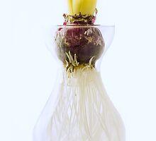 Bucket by Richard Hamilton-Veal