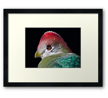 Red-Crested Turaco Framed Print