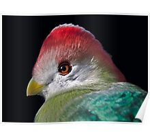 Red-Crested Turaco Poster