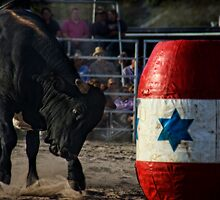 Bull  by Steven Maynard