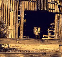 Old Barn with Horse by Lisa Taylor