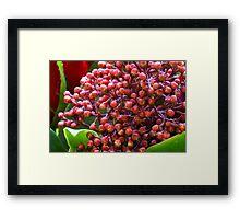 Colorful buds Framed Print