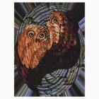Owl's   by Roydon Johnson