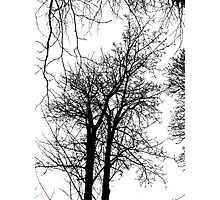 Reaching For The Skies Photographic Print