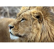 Profile Of A King Photographic Print