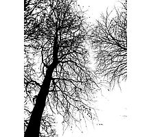 To The Heavens Photographic Print