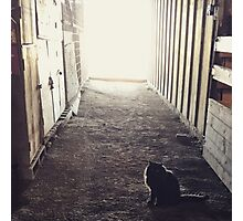 Cat in a Barn Photographic Print