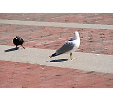 You're just not Goodfeather material, Gull, now scram! Photographic Print