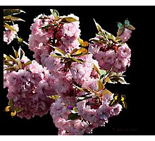Blossom in spring Photographic Print