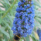 A Buzz In The Blue by justbyjulie