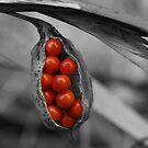 Berry Burst by PortisArt