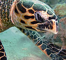 Turtle by cooperscuba