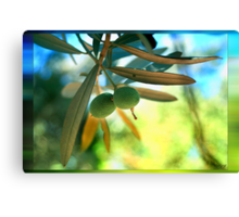 Aegean & Mediterranean Pearl or Gold, Olives Canvas Print