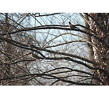 Afternoon Mourning Doves Photographic Print