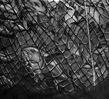 Tuna snarled by Yvonne C. Neth