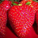 So Sweet.... by DottieDees