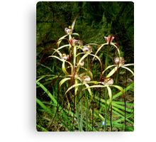 Spider Orchids Canvas Print