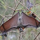 Great-Headed Flying Fox by Lars