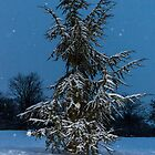 Fir Tree and snow by Mathieu Longvert